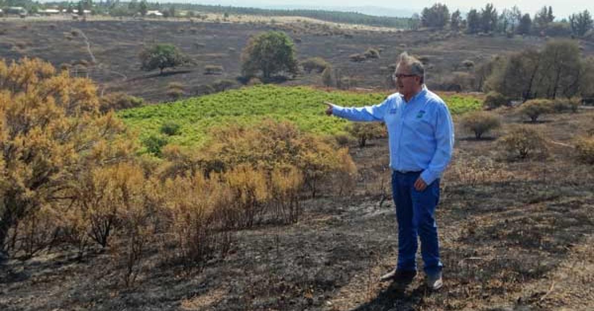 Resultado de imagen para Estiman que daño por calor y humo a la uva vinífera será moderado