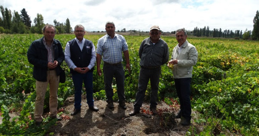 Resultado de imagen para Cooperativa de viñateros de Quillón puso alta exigencia para exportar